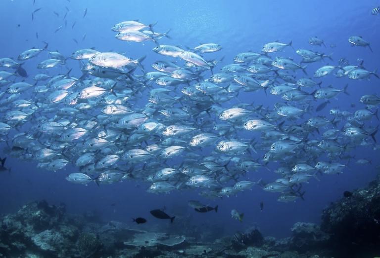 Bali2019-nurkowanie